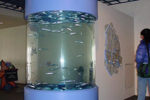 herring-tank-with-200-fish