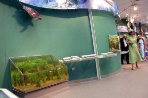 seagrasstank